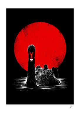 Midnight Swan