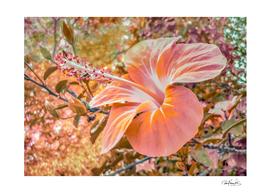 Fantasy Colors Hibiscus Flower Digital Art
