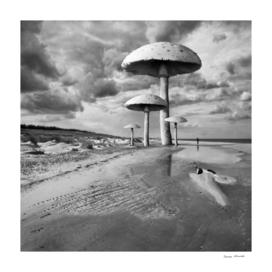 Mushroom Beach