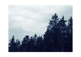 Morning Blue in the Woods #1 #wall #art #photography