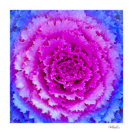 Pink and Blue Plant Exotic Nature Print