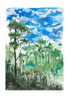 Rainforest Sketch