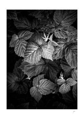 Plant photo 2 black and white #plant #blackandwhite