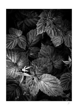 Plant photo 1 black and white #plant #blackandwhite