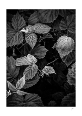 Plant photo 3 black and white #plant #blackandwhite