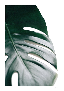 Better Half - Monstera Leaf