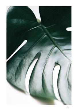 Come Closer - Monstera Leaf