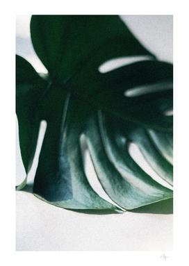 Near and Far - Monstera Leaf