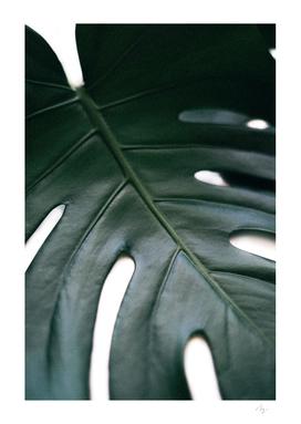Purely - Monstera Leaf