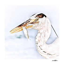 Heron's snack