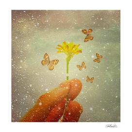 8885346-butterflies-charmer