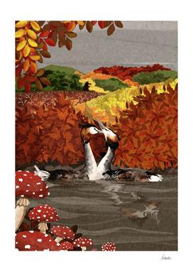 grebes autumn