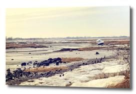 Wasteland - A scene of the Jamaica Bay marshland in NY