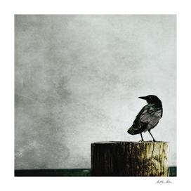 Crow at Sea