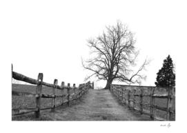 Antietam Battlefield, Maryland