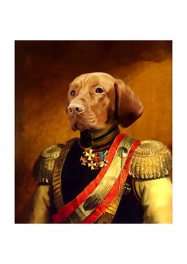 Pet portraits, Queen, Regal pet portraits