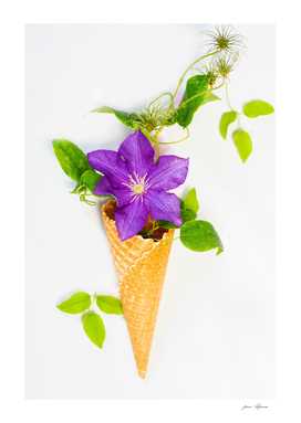 Waffle cone with  one beautiful lilac clematis with leaves