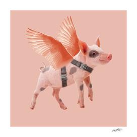 Little Piggy can Fly 02