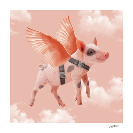 Little Piggy can Fly
