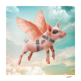 Little pig Can Fly