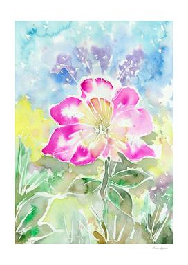 Magenta Summer Flower