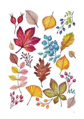 leaves and berries In Watercolor