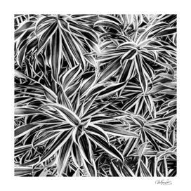Black and White Tropical Print