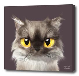 Mink the Persian cat