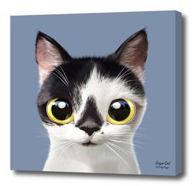 Ggomi the cat