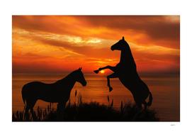 Sunset Stallions