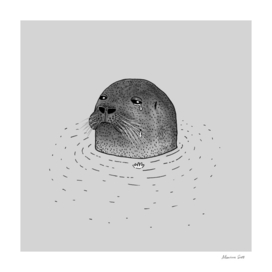 Sad Seal