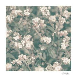 Beauty Floral Scene Photo
