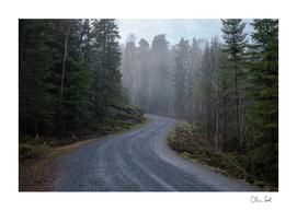 Foggy road in Oslo