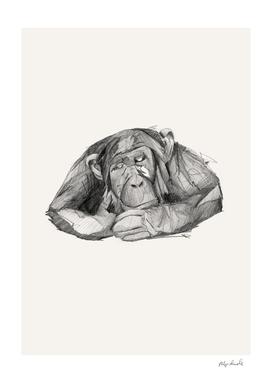 seven-monkeys-sloth