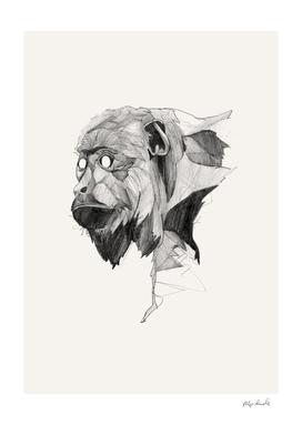 Seven Monkeys – Greed