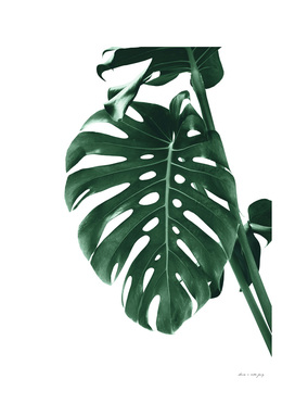 Monstera Delight #4 #tropical #decor #art