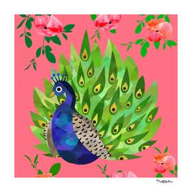 summer Peacock