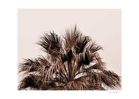 Palm tree top monochrome
