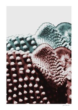 Cactus texture layering
