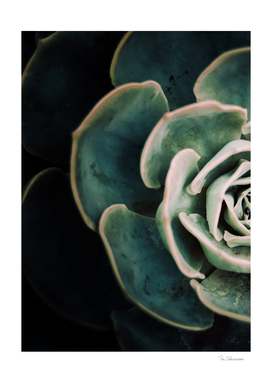 DARKSIDE OF SUCCULENTS IV-E