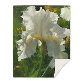 White Iris at Wawuatosa