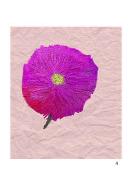 Purple and Red Wild Flower Watercolor on Wrinkled Paper