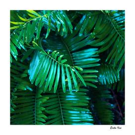 Palm Greem Leaves