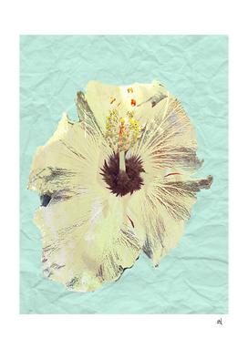 Pale Yellow Flower on Winkled Paper, Minimal Art