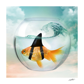 GOLDFISH WITH A SHARK FIN IN ABOWL
