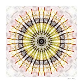 Mandala strond roots