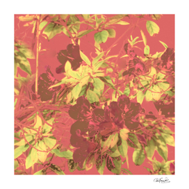 Tropical Vintage Floral Artwork Print