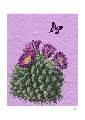 Mexican Purple Cactus, Purple Butterfly