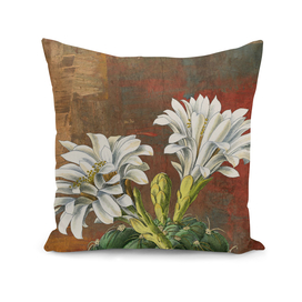 White Spider Cactus, Desert Flower, Floral, Nature Plants