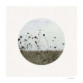 Circular Landscape Field